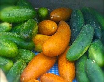 Gourmet Cucumber India's Poona Kheera Grown to Organic Standards Very Rare Crispiest Juiciest Cucumber Known Very Prolific Rare Seeds