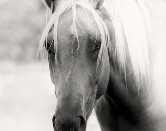 Horse Photography Sepia Horse Art