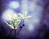 "Indigo Photography - dark blue purple nature photography green branches wall art periwinkle print, 16x20, 11x14, 8x10 Photograph, ""Indigo"""
