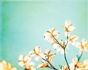 """Floral Photography - aqua blue white dogwood branches spring flower print yellow brown pale wall art nursery photograph, """"Blossoms Adrift"""""""