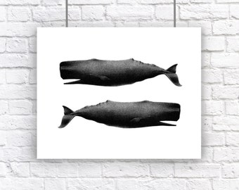 Large Twin Whales Nautical Vintage Style Art Print Beach House Decor Black and White