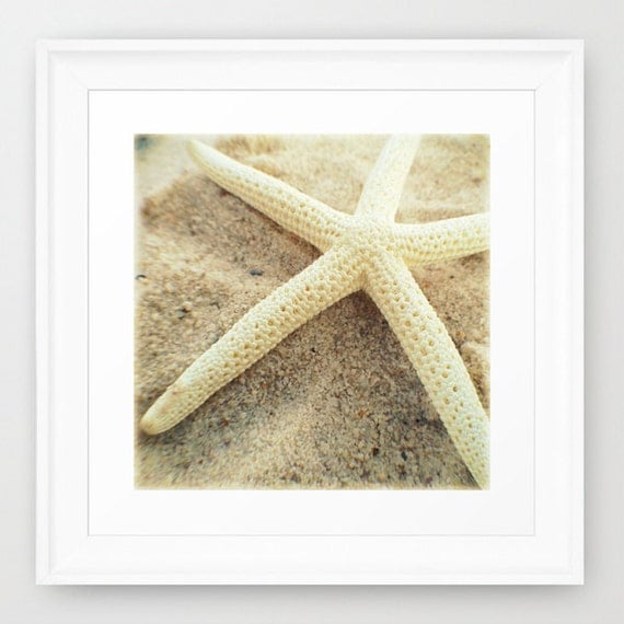 Nautical Wall Art | White Starfish Photography | Coastal Decor Beach House Art Print | Nautical Decor Sea Star | Beach Wall Art Decor Print