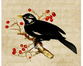 Blackbird Red berries Instant digital download printable image for iron on fabric burlap transfer decoupage pillows papercraft Item No. 2059