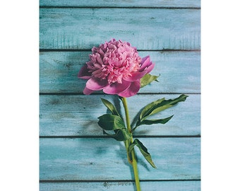 Pink peonie photograph - penie photograph - pink flower art print - flower photography - nature photography - pink wall art - pink peonie