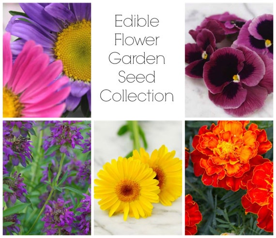 The Edible Flower Garden Seed Collection - Fresh Eggs Daily Chicken Keeper's Heirloom Seeds