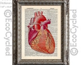 Anatomical Heart 2 on Vintage Upcycled Dictionary Art Print Book Art Print Recycled Cardiology