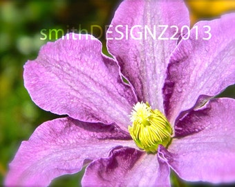 Purple Flower, Photography, Nature Print, Home Decor, Vinyl Wall Decal, by Abby Smith, (FREE SHIPPING)
