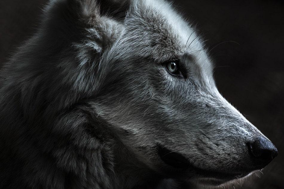 tumblr lone wolf