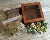 Vertical Succulent Planter Kit