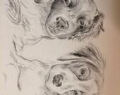 Custom Pet Portrait for bekpar