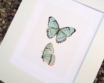 Pale Blue Butterfly Naturalist Study Archival Print