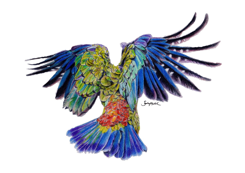 Perroquet en vol dessin au crayon de couleur par sashamalikart - Perroquet en dessin ...