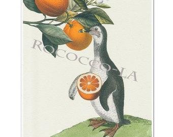 Oranges! - Penguin print, Mixed media Decorative art, Animal painting, drawing, illustration, portrait, POSTER 8x10