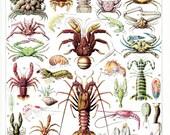 Gravure de crustacés vintage 1936 Illustration de crustacés vintage Déco de plage déco de cuisine déco de restaurant Fruits de mer
