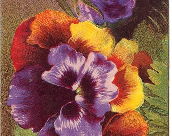 Vintage Best Wishes Pansy Postcard