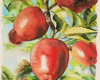 Apples on the Tree. Original Watercolor on Paper, 9 1/2 x 11 1/2 - FREE SHIPPING