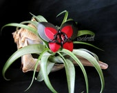 Scale Butterfly Barrette, Black and Red Hand Made Aluminum Hair Accessory