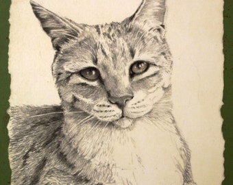 "original pencil drawing mounted for easel or to hang shelter cat charity - ""Rio"""