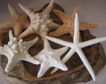 Mixed 6 PC Starfish Collection - White Starfish - Knobby - Sugar - Jungle - Natural Starfish - Seashells - Coastal home decor - Shell Supply