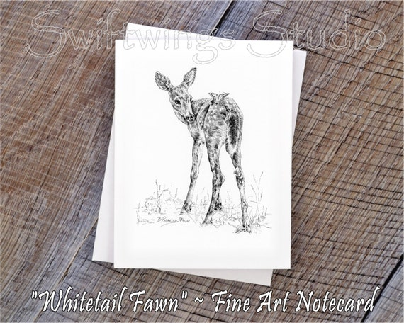 Wildlife Note Cards - Whitetail Fawn Note Card - Animal Note Cards - Whitetail Fawn - Wildlife Greeting Cards - Baby Animal Cards