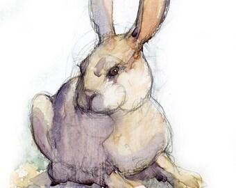 Notecards - A Fine Rabbit