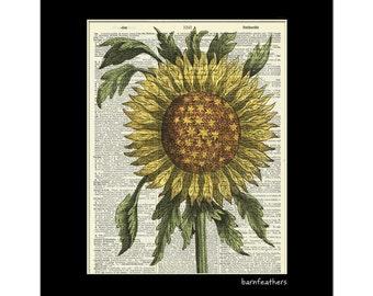 1600s Sunflower - Dictionary Art Print - Gardening - Dictionary Page - Book Art Print  - Home Decor No. P343