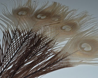 Bleached Golden Peacock Eye Feathers / Brown tips [Custom Order - Lisa]