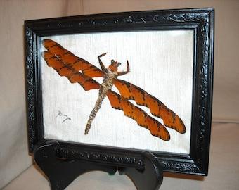 Dragonfly butterfly wing art dragonflies butterflies