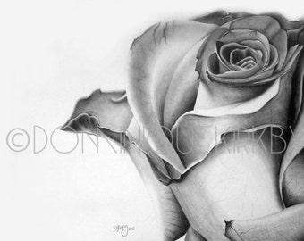 Rose Close-up Graphite Drawing Print