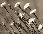 Rustic Wall Decor, Dandelion Photography, Sepia Art, Flower Print, Nature Photo, Summer, Botanical