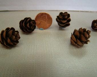 100 Hemlock miniature pine cones