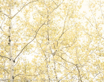 Pale Yellow: Rustling autumn leaves, larch trees, fall colours, calming forest, tree branches, soft light, peaceful woodland, pale yellow