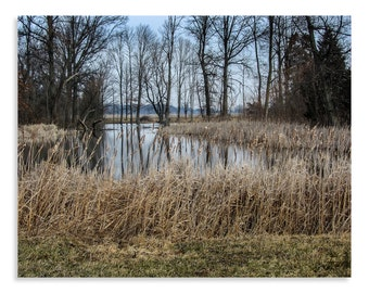 Nature Print - Pond Print - Cattail Print - Nature Photography - Pond Photo - Country Decor - Ohio Photography - Cattail Pond
