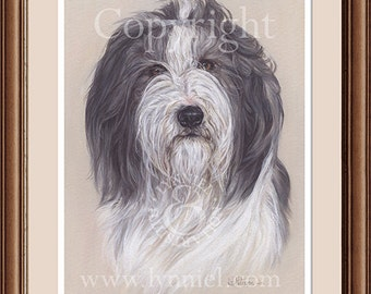 BEARDED COLLIE head study fine art print