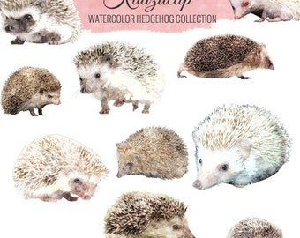 Watercolor Hedgehog Collection - Commercial and Personal Use