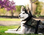 Camouflage Mobility Dog Vest (Service Dog)