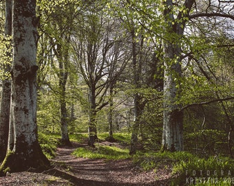 SHADE photography print,  Scotland woodland landscape, 8x12