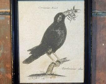 Print of  a Crow Framed in a Vintage Black Frame