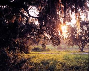 Coupon Code 1STPURCHASE, Landscape photography, Florida, Sunrise, Old Oak, Spanish Moss, Trees, Color, 8x8 Print, Home Decor