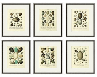 Bird Eggs art Print poster Set of 6 prints nature print antique prints Garden Wall art vintage Eggs decor art Print set Natural History art