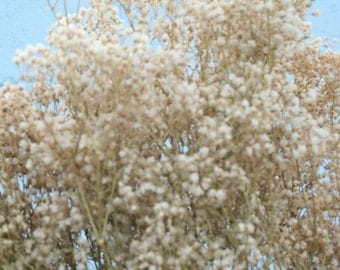 Beautiful, Natural,Freshly Dried Baby's Breath  (Gyp) fFowers.