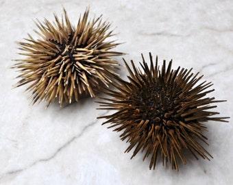 """Sea Urchin w/Spines (2 pcs.) - (2.5-3.5"""") - Echinometra Mathaei"""