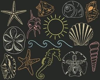 Chalkboard Beach Clip Art, Seashell Clipart, Hand Drawn Sea Shell, Seahorse, Starfish, Sea Star, Conch, Sand Dollar, Ocean Wave, Sun, Snail