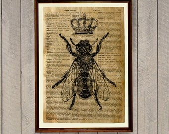 Insects print Bee decor Animal poster Dictionary page WA133