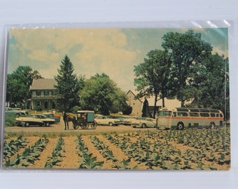AMISH FARM and HOUSE Color Post Card, Vintage Amish Country Post Card, vintage paper ephemera, Lancaster County souvenir, Historic Souvenir
