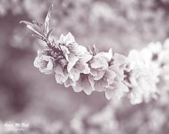 Spring blossoms, peach tree, Black and white fine art print