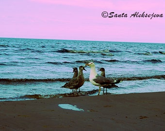 Seagulls - Fine Art Photography - Digital photography download, instant download, seagull photography, gull photo, beach photo, sea photo