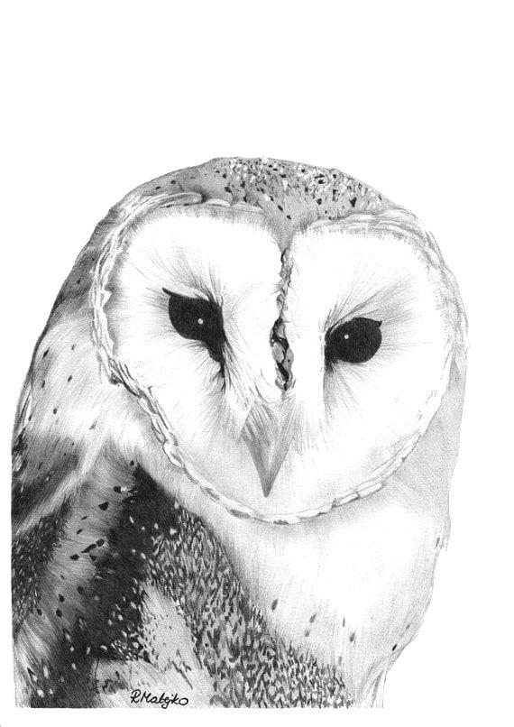 Items similar to Barn owl - Original Graphite Pencil ...