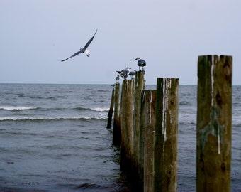 Free. Galveston, Texas. 2010. Ocean-themed photography. Wall art. Fine art photography. Texas photography. Seagulls. Wildlife.