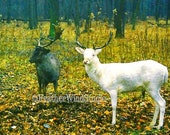White Deer | White Tailed Deer | Elk | Albino | Nature Wildlife Photography | Animal Photo Wall Art | Home Decor | Print